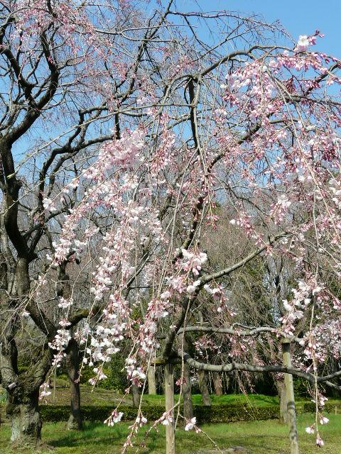 神代植物公園の樹木の花_e0145782_7231488.jpg