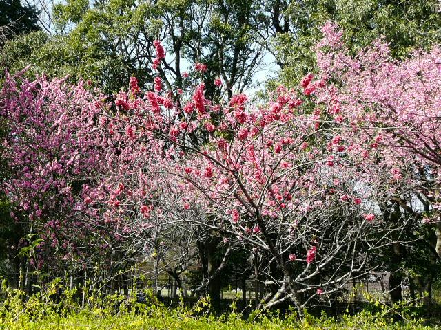 神代植物公園の樹木の花_e0145782_7235127.jpg