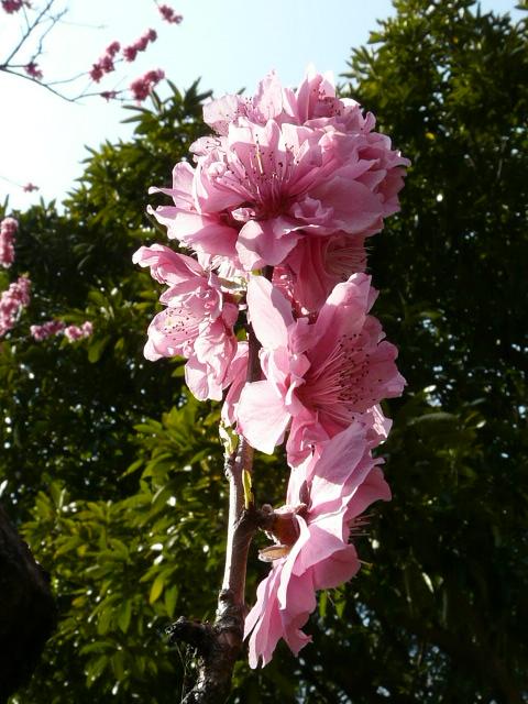 神代植物公園の樹木の花_e0145782_7242249.jpg