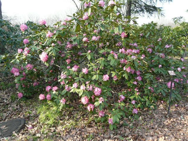 神代植物公園の樹木の花_e0145782_726164.jpg