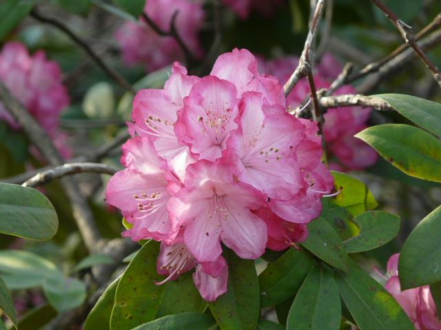 神代植物公園の樹木の花_e0145782_7261649.jpg