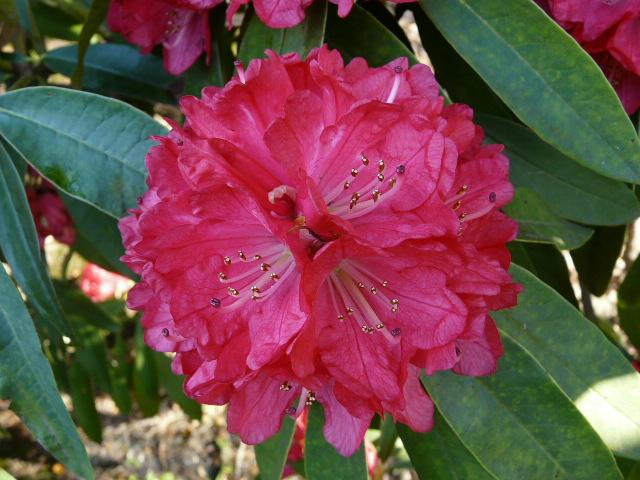 神代植物公園の樹木の花_e0145782_7264649.jpg