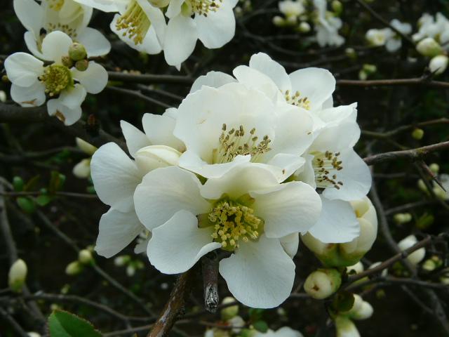 神代植物公園の樹木の花_e0145782_7272655.jpg