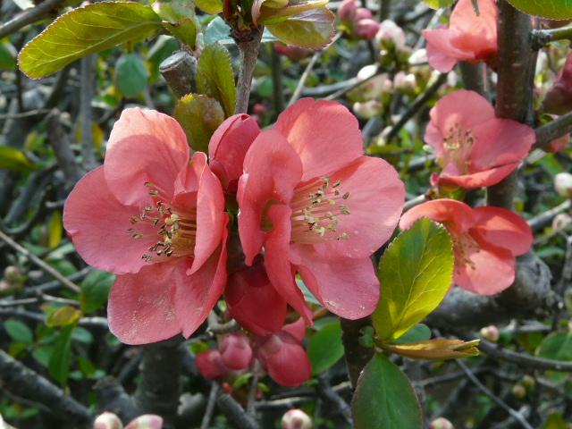 神代植物公園の樹木の花_e0145782_7274039.jpg