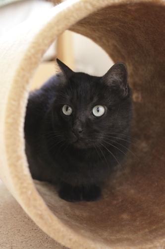 元猫タワーのトンネルに入って、まったく分かっていない小僧