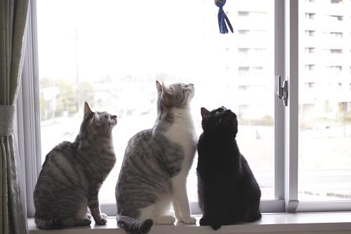 タコさんを見上げるお嬢さんとお坊ちゃんと小娘