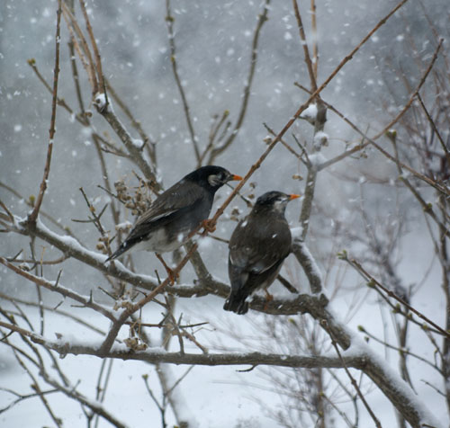 今日も雪です。 猫部屋の多肉植物たち♪_a0136293_16515730.jpg