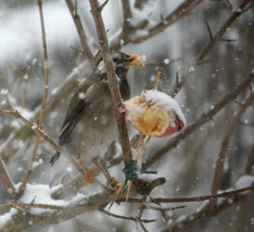 今日も雪です。 猫部屋の多肉植物たち♪_a0136293_16522189.jpg