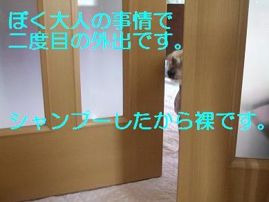 f0179203_753275.jpg