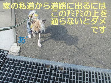 f0179203_7533682.jpg