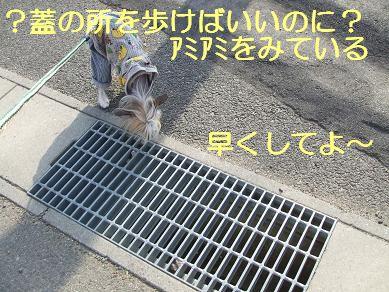 f0179203_7534852.jpg