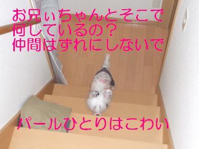 f0179203_828937.jpg