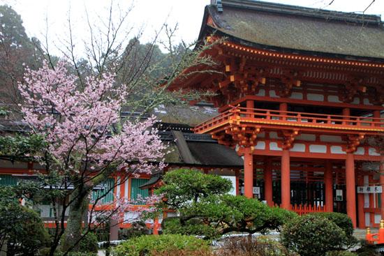 上賀茂神社 咲き始め_e0048413_21375452.jpg