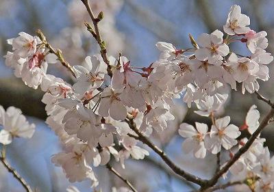 お花見♪_c0216518_20293912.jpg