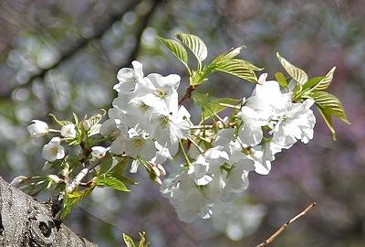 お花見♪_c0216518_20295172.jpg