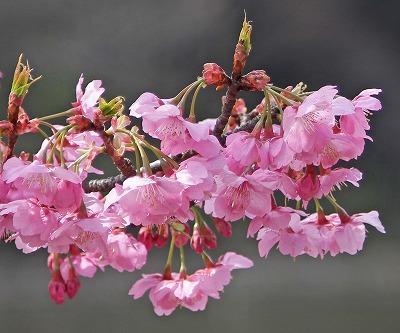 お花見♪_c0216518_2030263.jpg