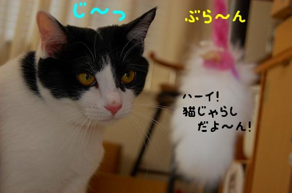 c0181639_102247.jpg