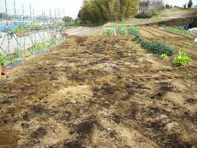今日も畝作り・・貴重な晴れ間を使って 土を耕します。_c0222448_12202639.jpg