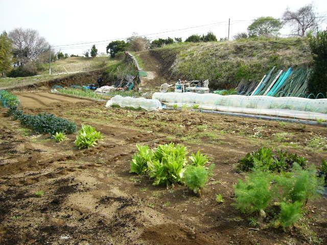 今日も畝作り・・貴重な晴れ間を使って 土を耕します。_c0222448_12203177.jpg