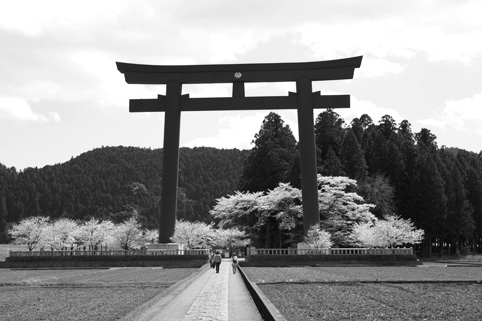 熊野の満開桜_a0086851_225950.jpg