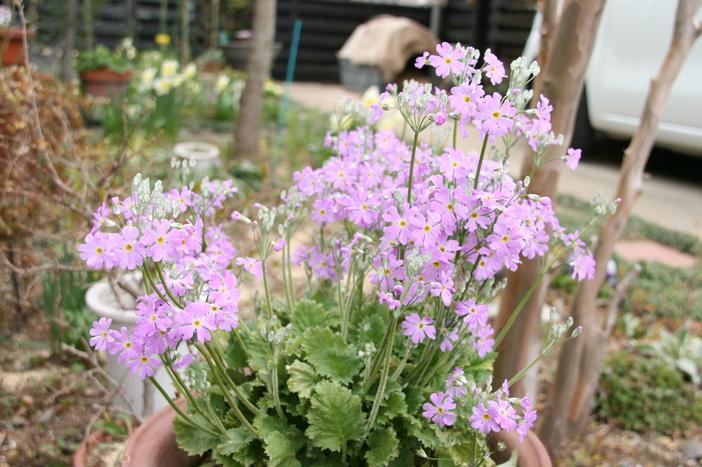 庭の花_c0213352_15302345.jpg