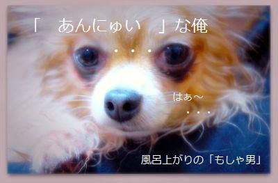 b0112758_17241896.jpg