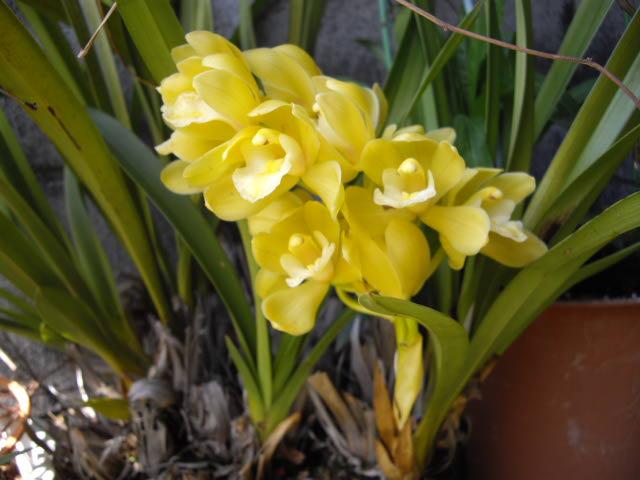春は名のみの~・・風の寒さよ・・_d0116059_20342292.jpg