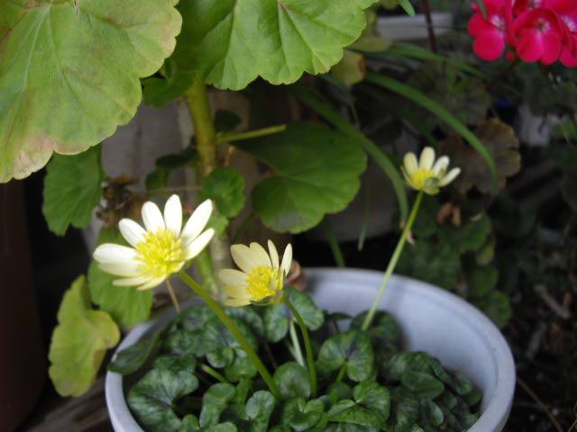 春は名のみの~・・風の寒さよ・・_d0116059_20422924.jpg