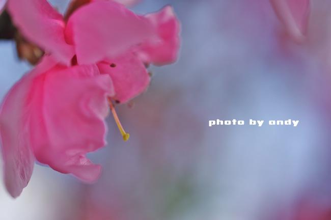 f0179061_1447219.jpg