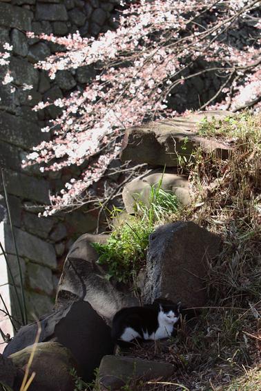 914  桜さく_c0049767_2313033.jpg