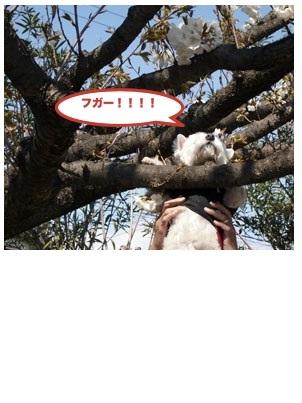 b0177868_18243576.jpg