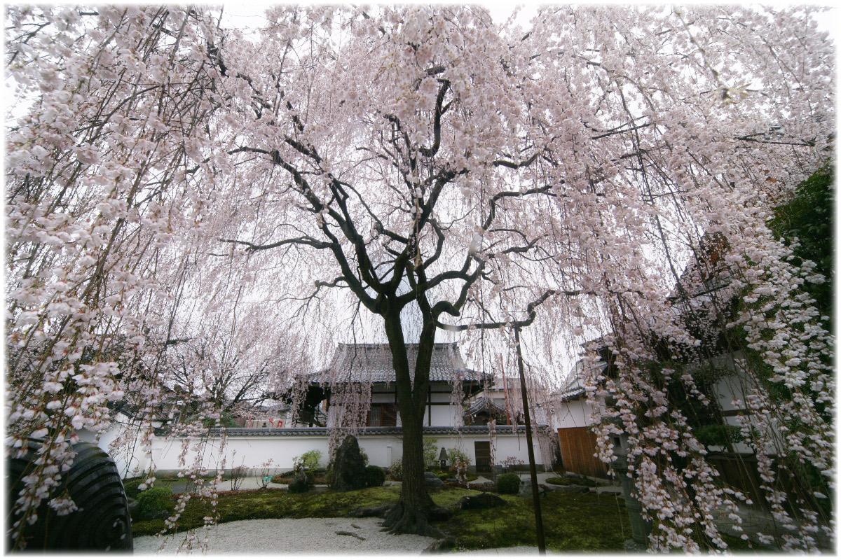 京都 本満寺  2_f0021869_2329326.jpg