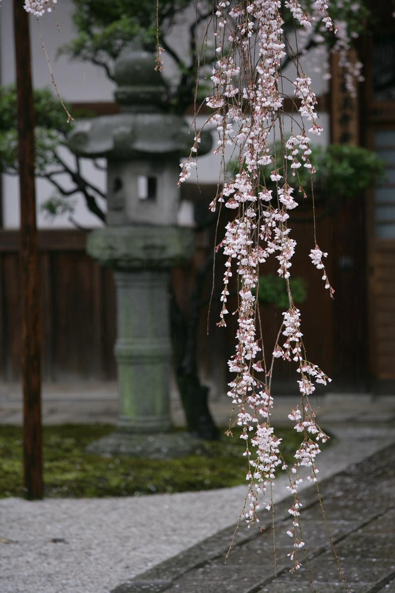 京都 本満寺  2_f0021869_23331541.jpg