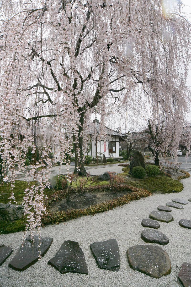 京都 本満寺  2_f0021869_233698.jpg
