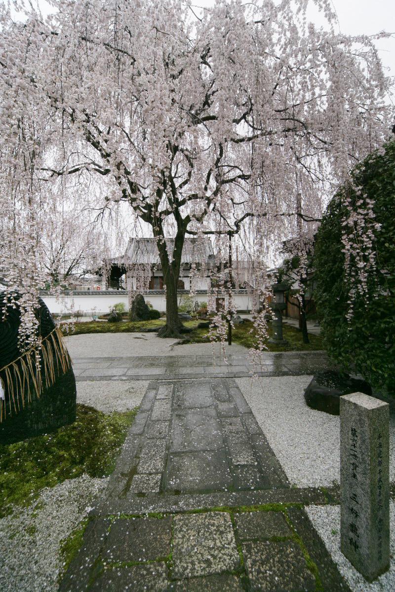 京都 本満寺  2_f0021869_23393891.jpg