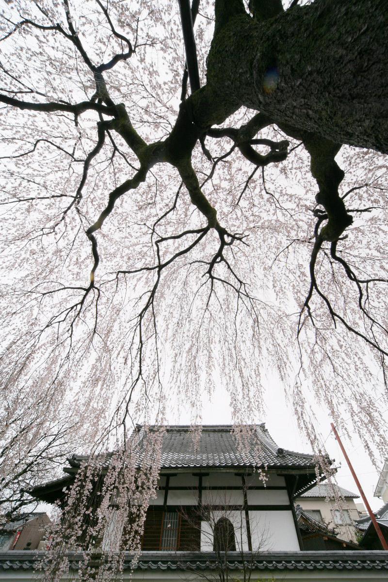 京都 本満寺  2_f0021869_23404717.jpg