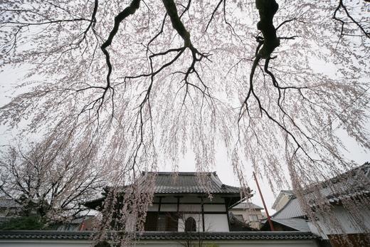 京都 本満寺  2_f0021869_23431718.jpg