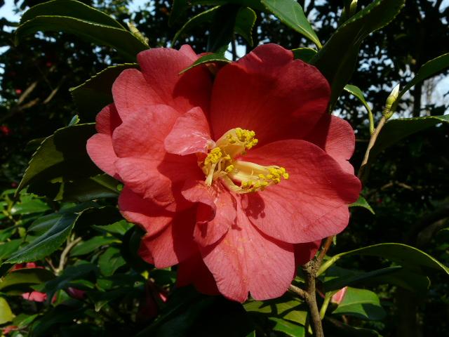 神代植物公園の椿園_e0145782_19302039.jpg