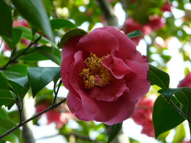 神代植物公園の椿園_e0145782_1934506.jpg