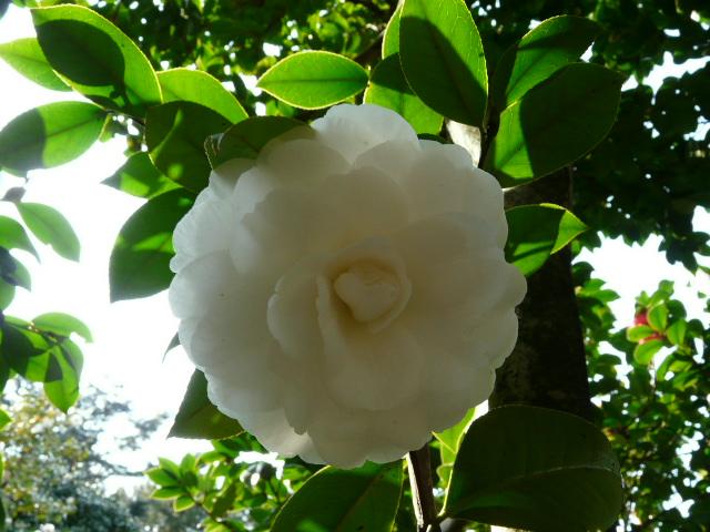 神代植物公園の椿園_e0145782_1935291.jpg