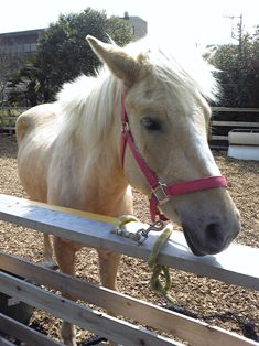 あいたんの初乗馬 ~Airi\'s first horseback riding~_c0105183_1440413.jpg