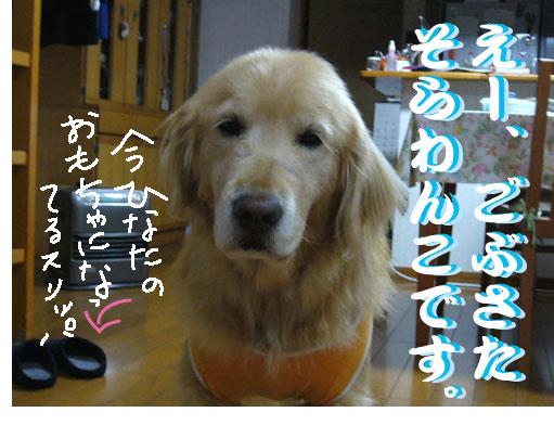 c0085188_2001524.jpg