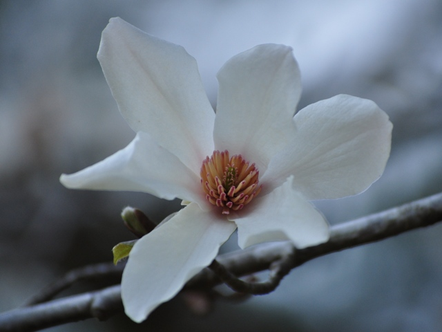 お花見準備完了_a0126590_22553327.jpg