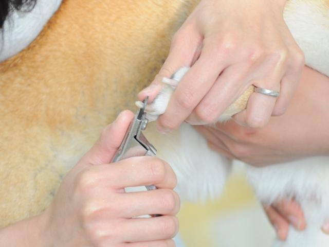 かぼすちゃんの爪、切ってあげてください。_a0126590_5552651.jpg