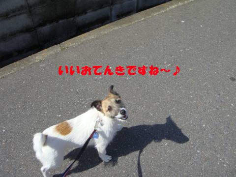 c0191597_992560.jpg