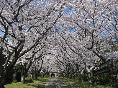 武雄の桜 2010_f0040201_2311328.jpg