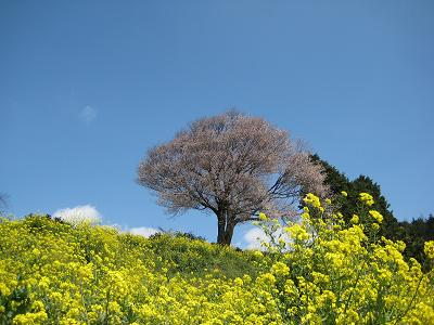 武雄の桜 2010_f0040201_23144297.jpg