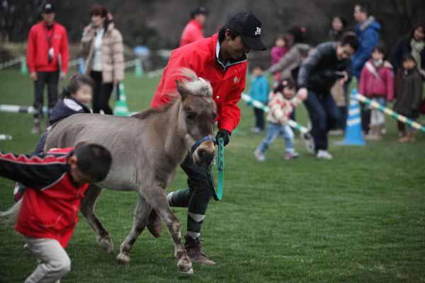馬事公苑桜祭り_d0148902_14154919.jpg