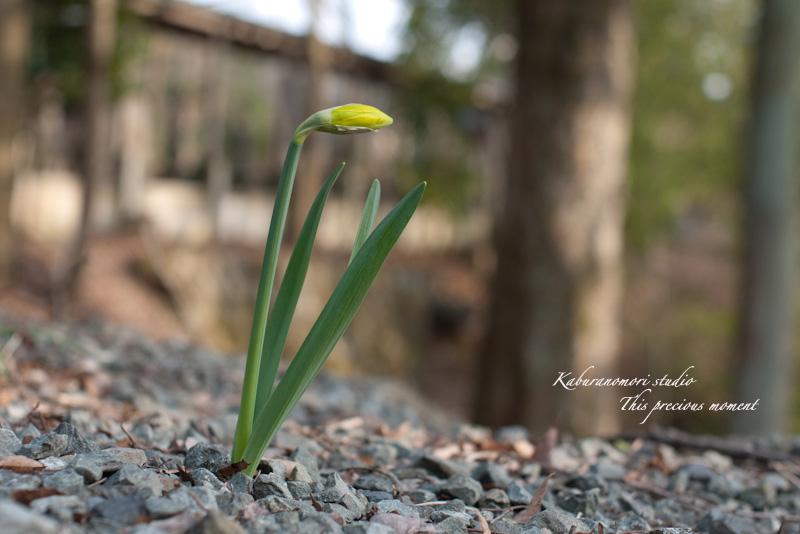 寒さが戻りながらも春が来てますね_c0137403_19302244.jpg