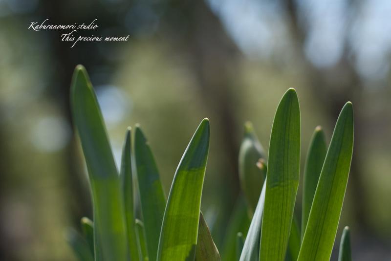 寒さが戻りながらも春が来てますね_c0137403_211946100.jpg